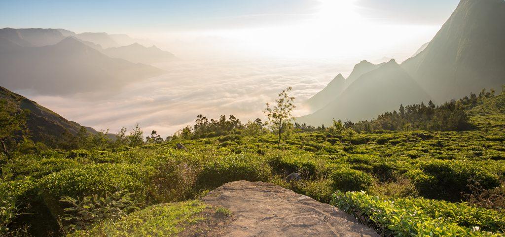 Landschaft in Kerala